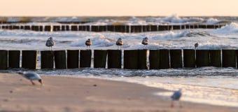 Seagulls på sjösidan royaltyfria foton