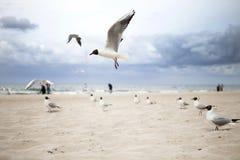 Seagulls på sjösidan Royaltyfri Fotografi