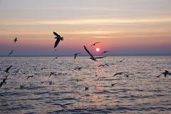 Seagulls på solnedgången Royaltyfri Fotografi