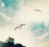 Seagulls på sommarhimlen med ett glåmigt på kullen Royaltyfria Foton