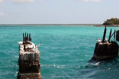Seagulls på stenarna i havet på en solig dag royaltyfri bild