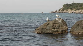 Seagulls på stenkust Royaltyfri Fotografi