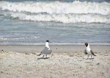 Seagulls på stranden Arkivfoton