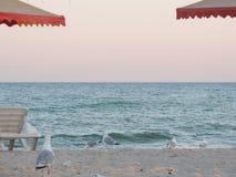 Seagulls på stranden Royaltyfri Fotografi