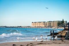 Seagulls på stranden Fotografering för Bildbyråer