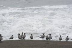 Seagulls på stranden Royaltyfria Foton