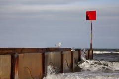 Seagulls på väggen Arkivfoton