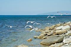 Seagulls på a vaggar Arkivbild