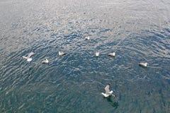 Seagulls på vattnet Fotografering för Bildbyråer