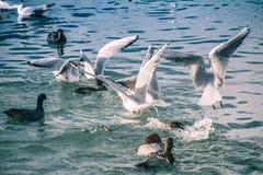 Seagulls p? havet arkivfoton