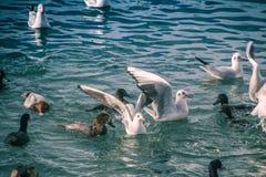 Seagulls p? havet royaltyfri foto