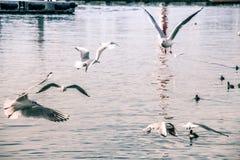 Seagulls p? havet fotografering för bildbyråer