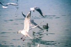 Seagulls p? havet arkivbilder