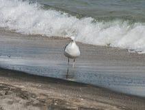 Seagulls på strandsand Royaltyfri Fotografi