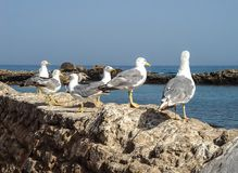 Seagulls on a parapet on the beach of the ocean stock image