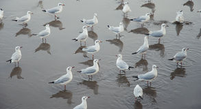 Seagulls Pattern. Group of seagull stand together Stock Photo