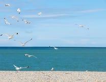 Seagulls on pebble beach Stock Photos