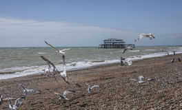 Seagulls and people on the beach in Brighton. This image shows some seagulls flying over the beach in Brighton. There`s the old pier visible in the background Royalty Free Stock Photo