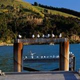 Seagulls perched on a jetty, Akaroa harbour, Banks Peninsula, New Zealand stock photos