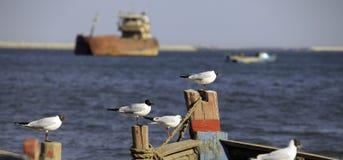 Seagulls perching Stock Image