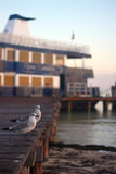 Seagulls at the pier Stock Images