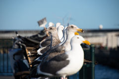 Seagulls on pier Stock Photo
