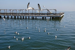 Seagulls on the pier Royalty Free Stock Image