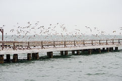 Seagulls on the pier Royalty Free Stock Images