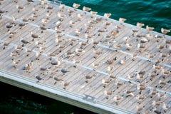 Seagulls on the Pier Stock Photo