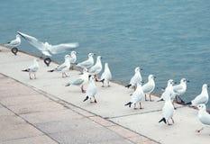 Seagulls at pier Stock Photos