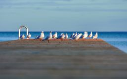 Seagulls on pier royalty free stock image