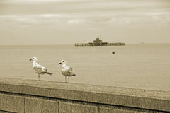 Seagulls and pier Royalty Free Stock Photos