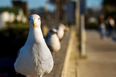 Seagulls on a pier Royalty Free Stock Photo