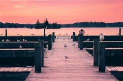 Seagulls on the Pier at Sunset Stock Photo