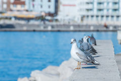 Seagulls and pigeons standing. On the cost in front of buildings Royalty Free Stock Photography