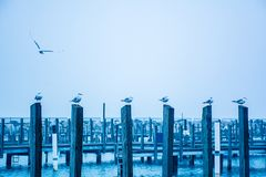 Seagulls on pilings Stock Image