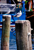 Seagulls on the Pillar Stock Image