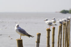 Seagulls on pillars Royalty Free Stock Photos