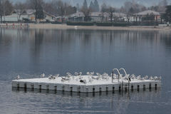 Seagulls on platform. Flock of seagulls resting on the platform Royalty Free Stock Images