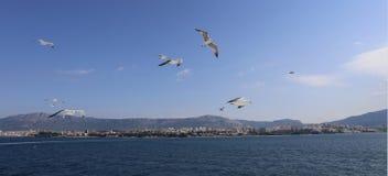 Seagulls podąża prom opuszcza rozłam, Chorwacja fotografia royalty free