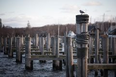 Seagulls on poles. Couple of seagulls sitting on a poles in ocean Stock Images