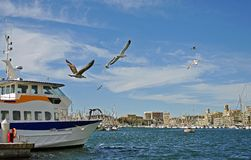 Seagulls in the port Stock Images