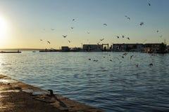 Seagulls in the port of Santa Pola, Alicante. Spain.  Stock Image