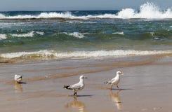 The seagulls in port stephens,australia Stock Photo
