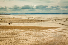 Seagulls on the Portobello beach at low tide Royalty Free Stock Photography