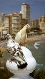 Seagulls on a post Stock Photos