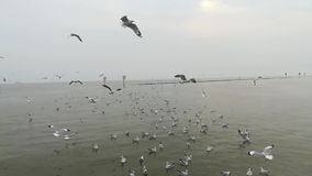 Seagulls przesiedleńczy przy atrakcjami turystycznymi w Tajlandia zbiory