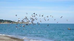 Seagulls przy brzeg zdjęcie stock