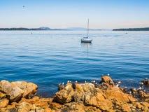 Seagulls przy skalistym brzeg Sidney BC, Kanada zdjęcia royalty free