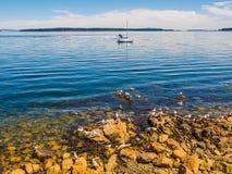 Seagulls przy skalistym brzeg Sidney BC, Kanada Zdjęcie Stock
